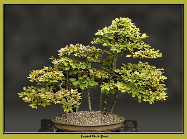 English Beech Group_edited-2