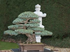 JWP 2012 Bonsai-Passion owned.