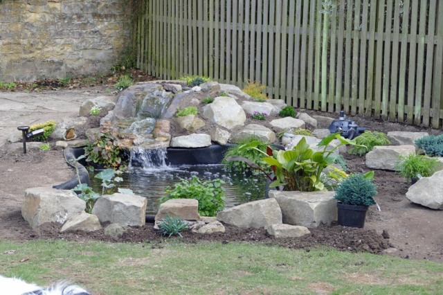 pond plants 1